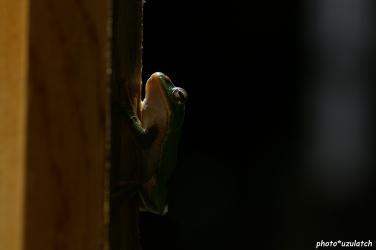 森青蛙01