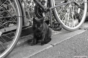 黒猫-mono