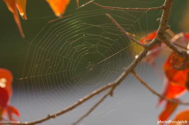 公園のクモの巣