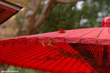 傘の上の秋