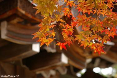 屋根と赤黄もみじ