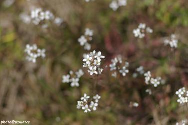 白い花^上から