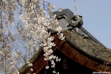 平野神社03