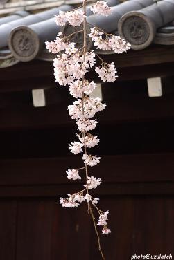 妙覚寺01