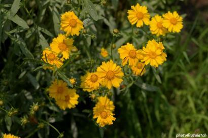 黄い花たち