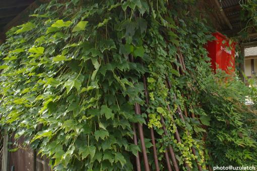 密集する葉っぱ