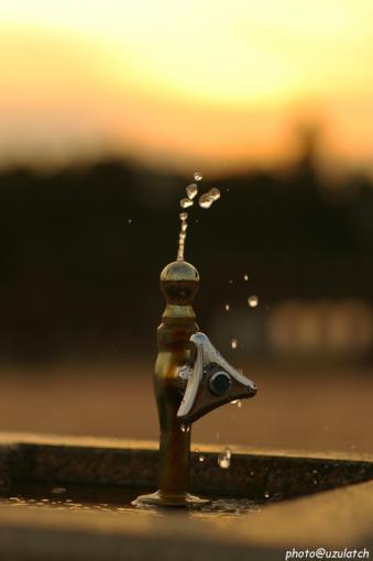 夕暮れの水飲みシルエット