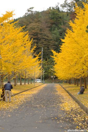 銀杏並木のギャラリー