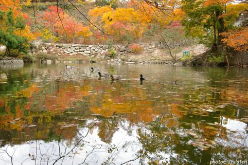 池の秋01