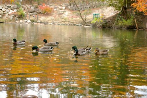 池の秋02