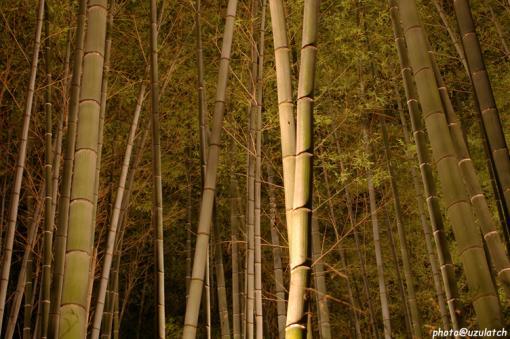 照らされる竹たち