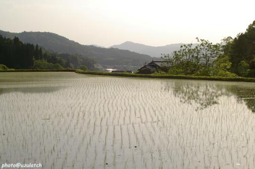 山の水田02
