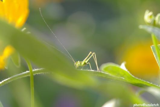 光を浴びる幼虫
