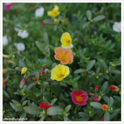 玄関先の花02