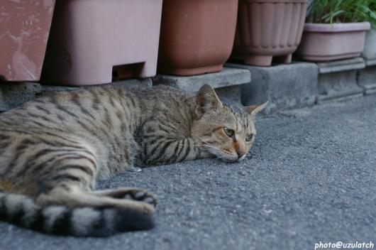 ノラ猫ちゃん01