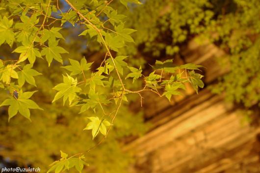 神護寺山門ライトアップ01