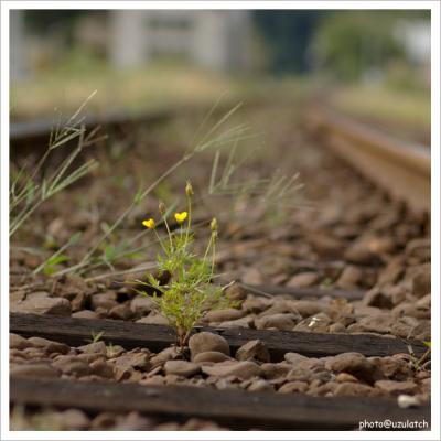 線路上に咲く