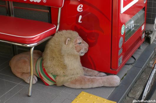 ライオンのたてがみ