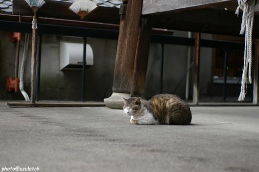 鐘撞堂の野良猫