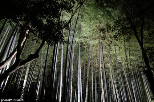 青蓮院竹林ライトアップ01