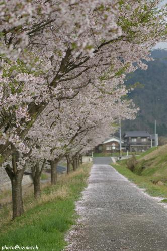 花びらの小道01
