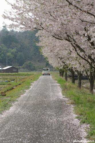 花びらの小道02