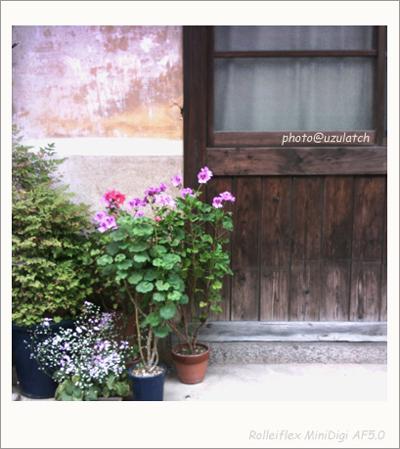 入り口の鉢植え