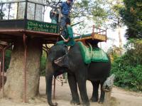 2008_0129angkor0257.jpg