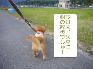 朝の散歩!