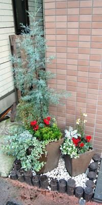 入り口の植木