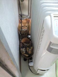 Animal-Hospital-cat04.jpg