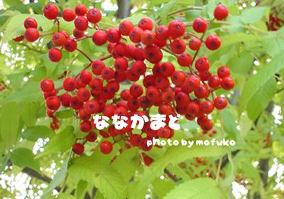 isuzu5-1.jpg