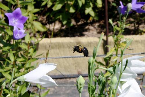 ぶんぶんハチさん