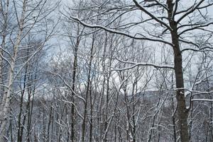 壮瞥町雪景色02