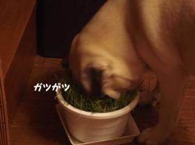 草食べる1