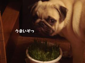 草食べる2