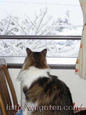 58年ぶりの大雪