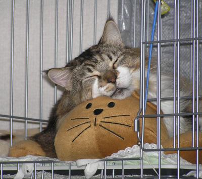 猫型ベッドでネンネ