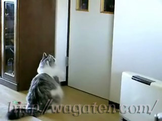 ドア開けはりしょん♪