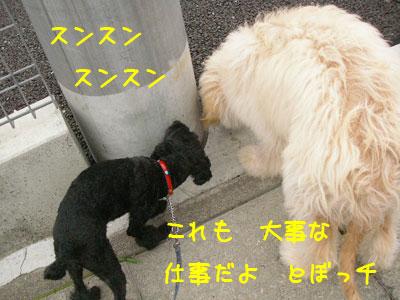 daijinasigoto.jpg