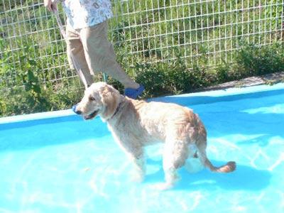pool-a.jpg