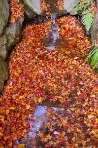 流れの落ち葉