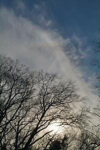 木々の間から覗く上部タンジェントアーク