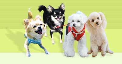 わんこのきもちの愛犬達、コジ、なな、ひなの&さくら