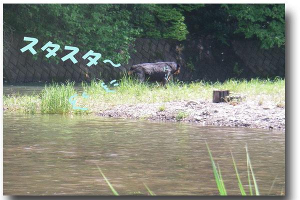 川遊び14