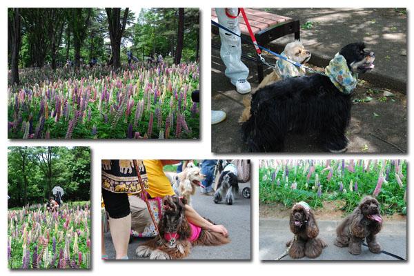 森林公園6