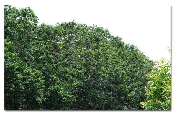 森林公園8