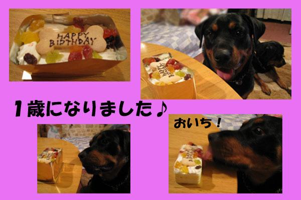 ドリの誕生日