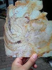 いかの煎餅