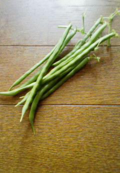インゲンさん 収穫